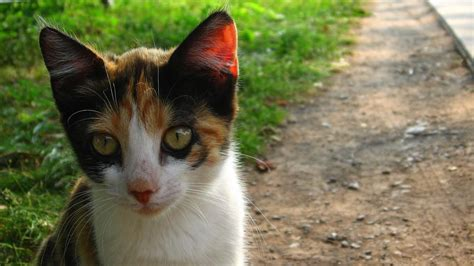 what are some good names for calico cats reference com