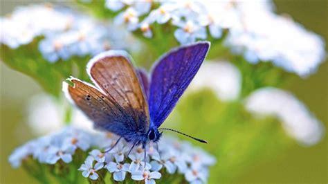 butterfly wallpaper for macbook purple butterfly mac wallpaper download free mac