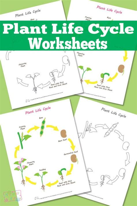 cycle of plants and animals worksheets plant cycles cycles and worksheets on