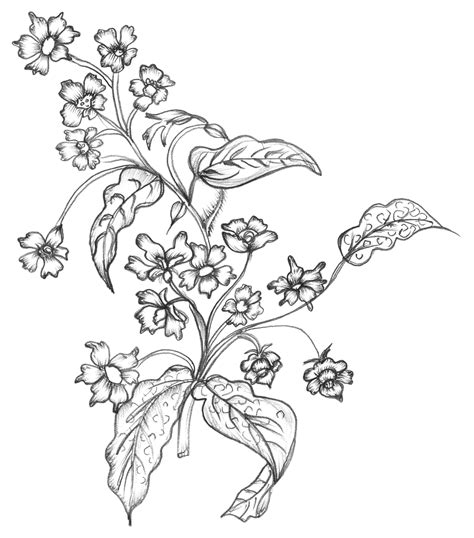 Plant Food That Comes With Flowers sketchy flowers free vector 4vector