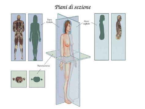 dispense anatomia anatomia umana elementi dispense