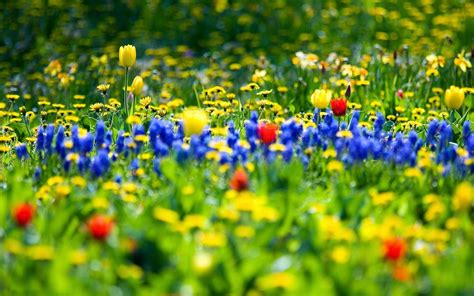 images of spring flowers spring flowers new hd wallpapers wallpapers