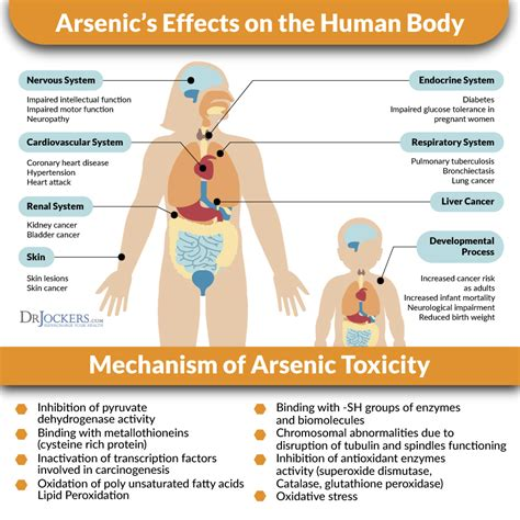 Detoxing Arsonic by How To Detox Heavy Metals Drjockers