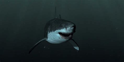 evidence of a 50 ton megalodon shark week discovery image gallery megalodon exists