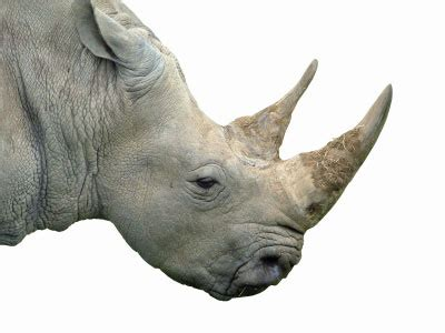 death from poisoned rhino horn rumour