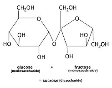 Table Sugar Formula by Thank You For Guzzling Corn Syrup T Nation