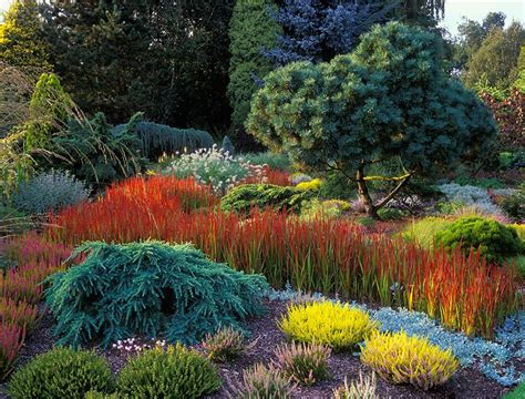 the all seasons bed at foggy bottom in september both younger and mature specimens of conifers
