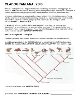 Cladogram Worksheet Key by Evolution Learning Objectives Grade 9