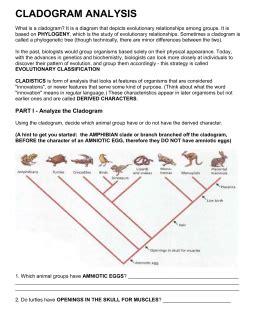 Cladogram Analysis Worksheet Answers