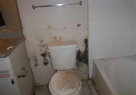 Bathroom Black Mold by Black Mold In Toilet Pictures To Pin On Pinsdaddy