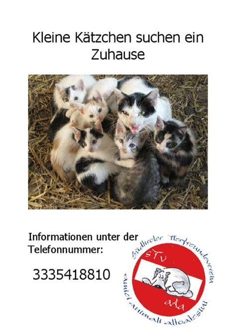 wir suchen ein zuhause tiere suchen ein neues zuhause alber tierarztpraxis