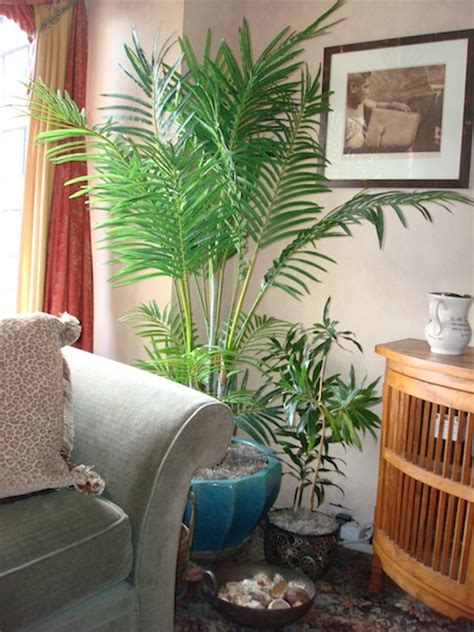 indoor plants arrangement ideas gardens by robert urban flower arrangements indoor