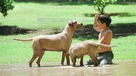 imagenes de niños jugando con animales los beb 233 s que crecen con perros enferman menos abc es