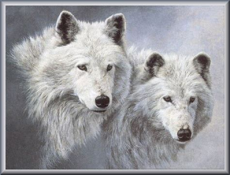 wolf s wolfs