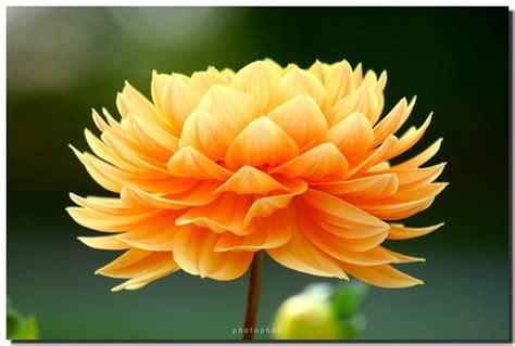 beautiful orange god s beautiful orange flowers god the creator photo