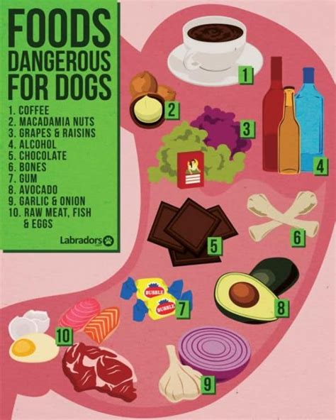 safe foods for dogs safe food chart ideas what to feed your