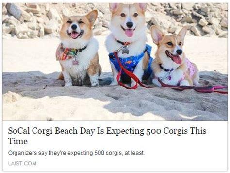 feeling the corgi nation the socal corgi nation day news corginationnewsnetwork