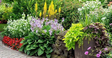 Annual Garden Flowers Your Plants Annual Vs Perennial My Garden