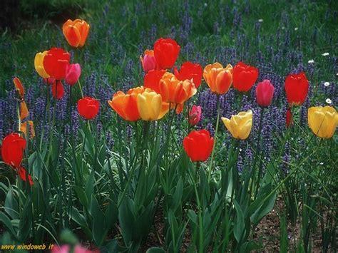fiori e fantasia canzone dolce primavera musica digitale community crea musica