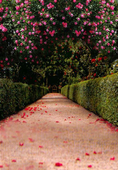 Wedding Background Photography by Wedding Photography Background Www Pixshark Images