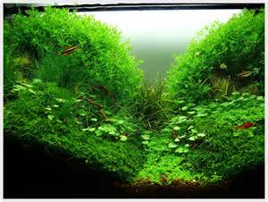 Aquascaping Tips Aquascaping A Planted Tank Decosee Com