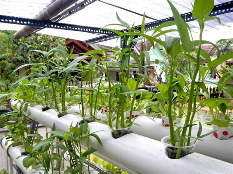 Starter Kit Hidroponik Surabaya tips bertanam sayur dengan hidroponik sederhana alat