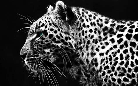 black and white leopard wallpaper white tiger wallpapers hd wallpaper cave
