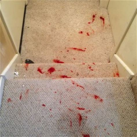 How To Dye Carpet Stains by When Is A Spot A Stain Carpet Spot Removal Advanced