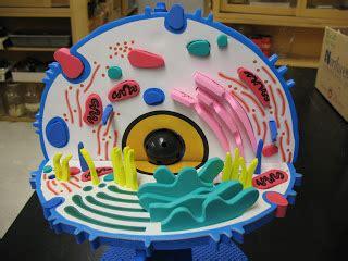 celula animal maqueta escolar youtube como hacer la maqueta celula animal este es un proceso