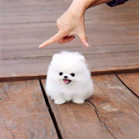 imagenes de animales jpeg 50 adorables im 225 genes de perros los cachorros m 225 s bonitos