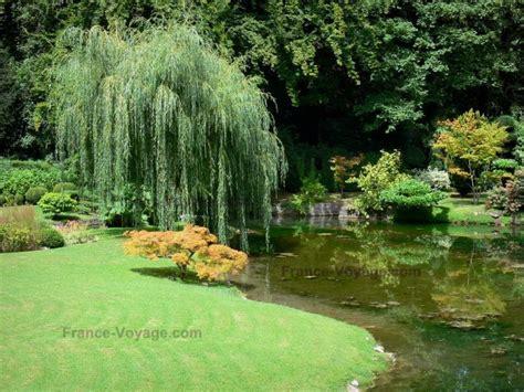 japanischer garten pflanzen japanese garden plant list de courances plants and