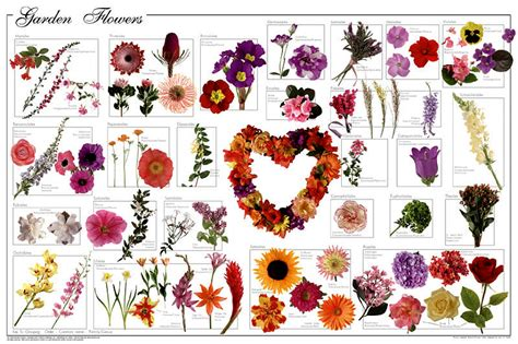 names and pictures of garden flowers garden flowers poster