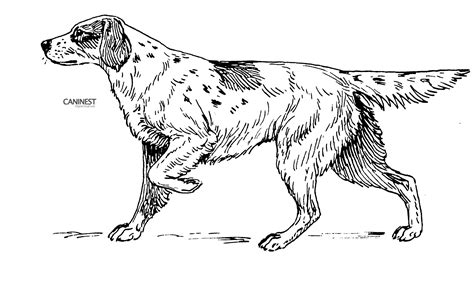 coloring book pages dog breeds dog breed coloring pages 2