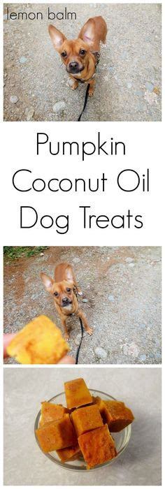 dogs and cinnamon 1000 ideas about treat jar on treats