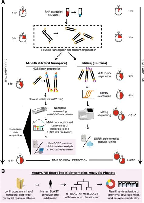 sequencing illumina metagenomic sequencing workflow for minion nanopore