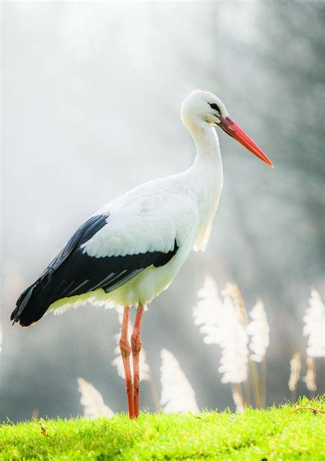 animal house stork 75 best images about birds storks on pinterest africa madagascar and arno