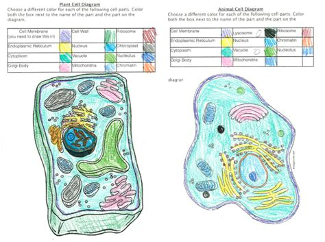 Animal Cell Coloring Worksheet Answers Worksheets Plant Cell Coloring