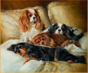 cavalier colors king charles spaniels charles spaniel and cavalier king