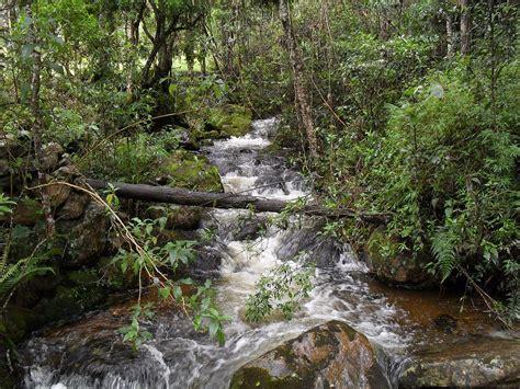 imagenes de santuarios naturales santuario de fauna y flora iguaque wikipedia la
