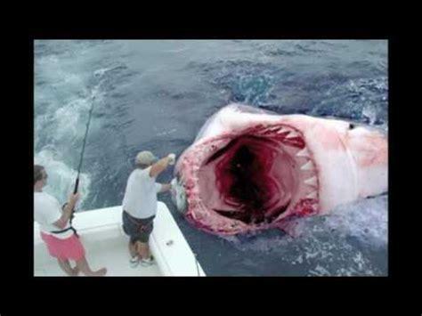 imagenes reales de un megalodon megatooth shark youtube