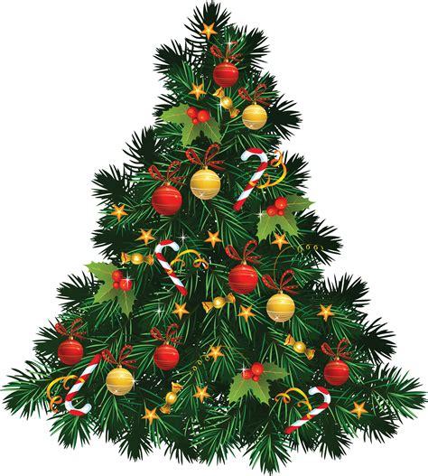 christmas fir tree png image