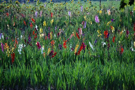 compo di fiori co di fiori foto immagini piante fiori e funghi