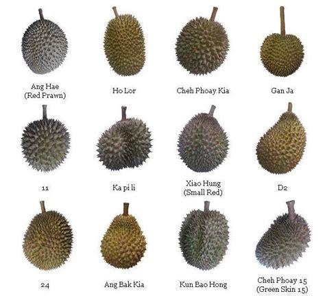 types  durian addgrainonearth