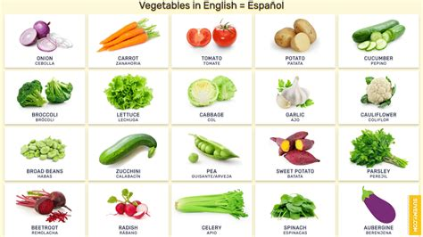 verduras y vegetales en ingles verduras en ingles pictures to pin on pinsdaddy