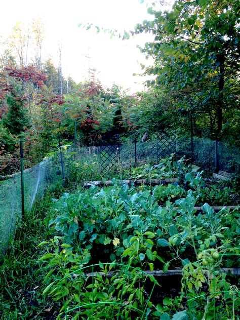 Backyard Organic Farming by Backyard Organic Veggie Farm Lessons Learned In Our