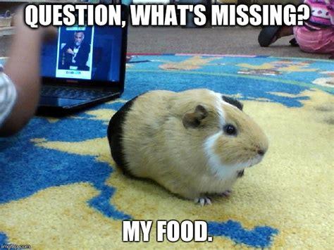 Guinea Pig Meme - guinea pigs need food imgflip