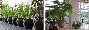 Indoor Foliage Plants - interior landscaping of houston planters and containers sugar land