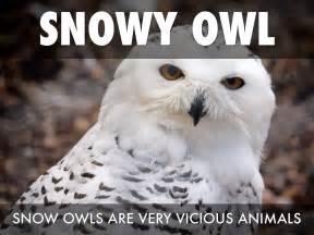 White Owl Meme - tundra by jewel walker