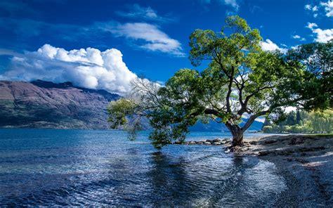 New Zealand Lake Wakatipu Tree Wallpaper