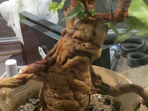 harry potter studio sets tour tec make up dept by sceptre63 on harry potter mandrake